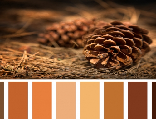 Find Your Fall Colors